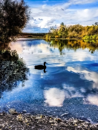 Clouds Reflected On Water With Duck Silhouette # 3