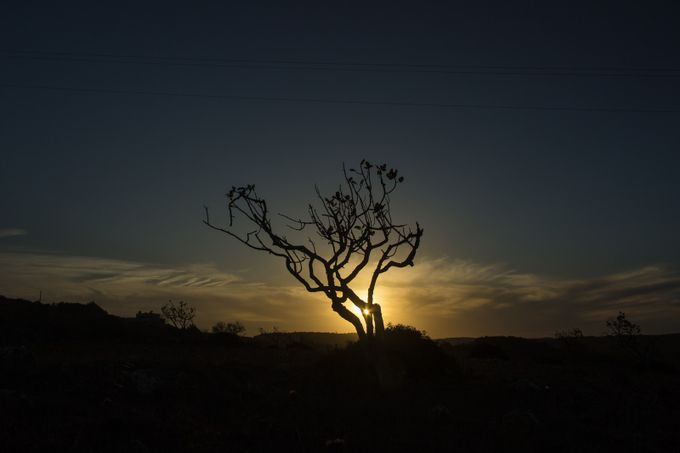 Tree Silhouette Sunset by Benninojets - Trees And Silhouettes Photo Contest