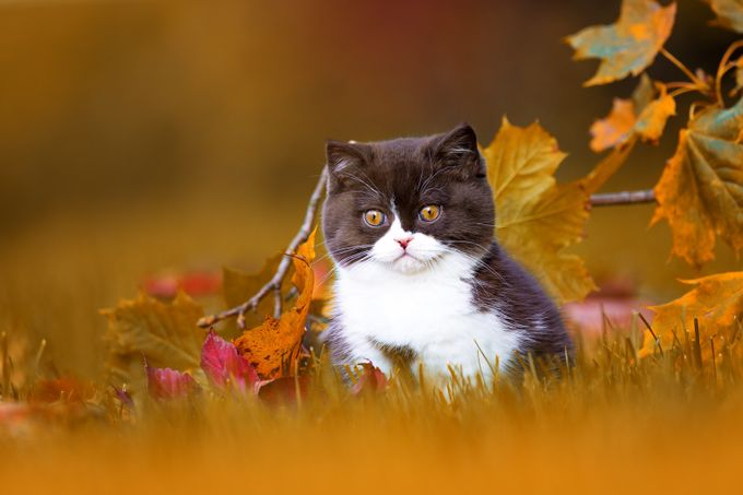 Autumn by Wabi-Sabi-Fotografie - Kittens vs Puppies Photo Contest