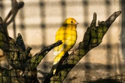 Captivity of shadow