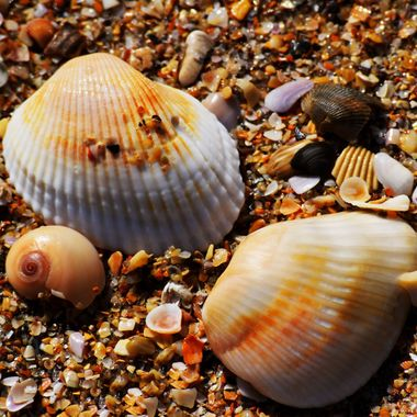 Seashells on the seashore at NSB Feb