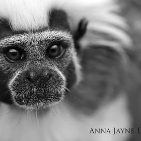 I adore this photo because there is so much emotion in this little monkey's eyes. He looks to me like an older monkey thinking back on his l...