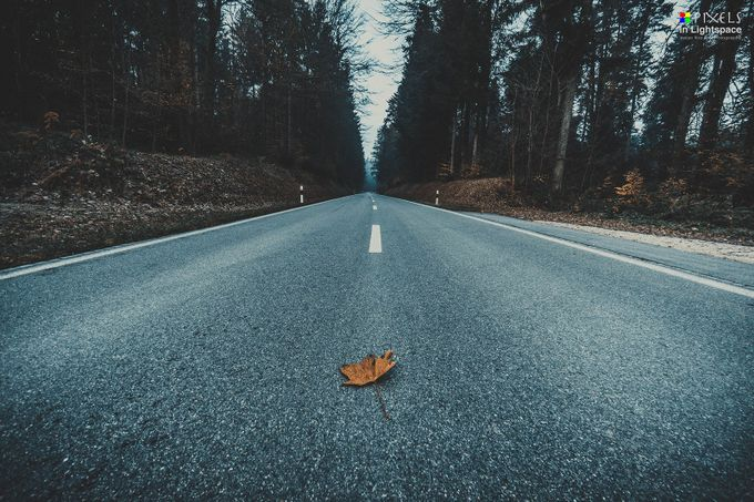 The Leaf on the Street by PixelsInLightspace - Subjects On The Ground Photo Contest