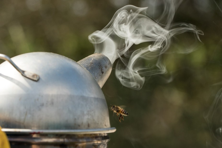 "A smoker is a beekeeping tool beekeeper use to ""smoke the bee's"" befor..."