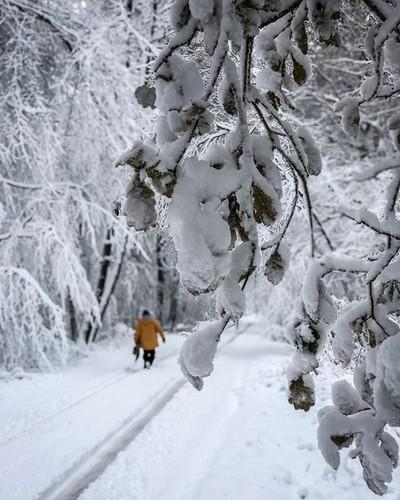 Uk snow day . . . . #snow #snowday #snowboarding #snowboard #uksnow #greatbritian #unitedkingdom #winter #trees #snowcovered #iphone7plus #iphone #iphonephotography #Iphoneallday #dof #depthoffield #photograph #photography #photographer #ukphotographer #n