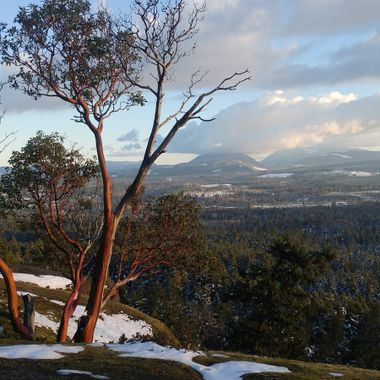 Arbutus Tree on our Amazing Little Mountain - 20 Feb 2018