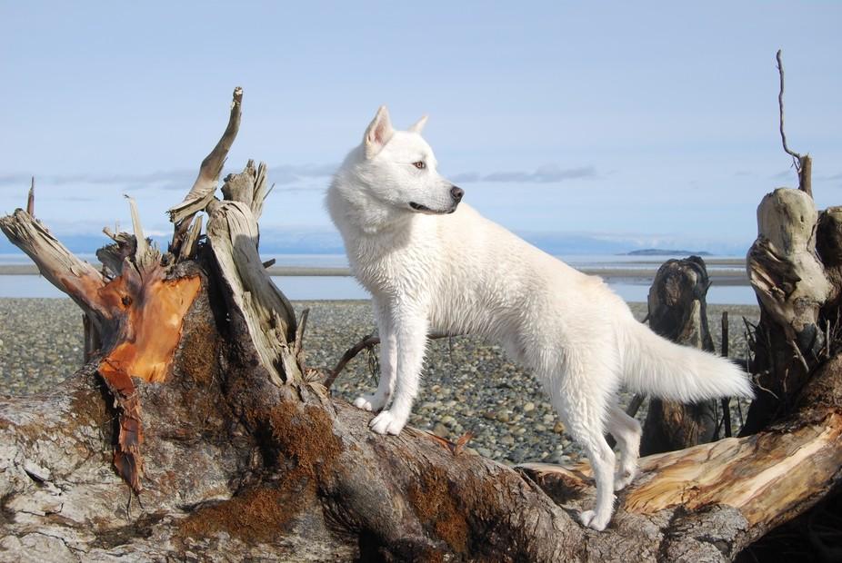 My Handsome Little Wolf - Mowg's - 19 Feb 2018