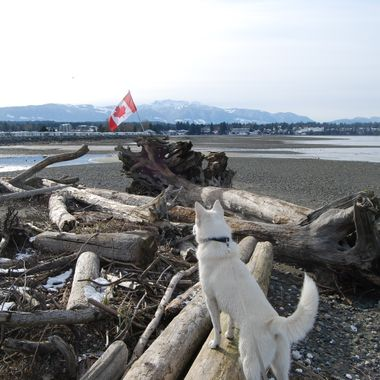 Patriot Mowgli 19 Feb 2018 behind Surfside on Vancouver Island