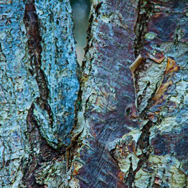 Bark Abstract 4
