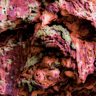 Bark Abstract in Rose