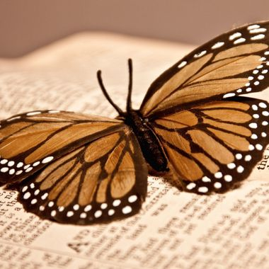Butterfly On Book