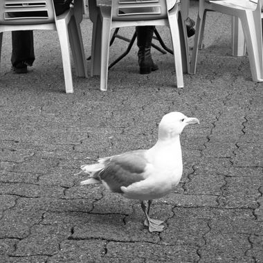 Waiting Seagull