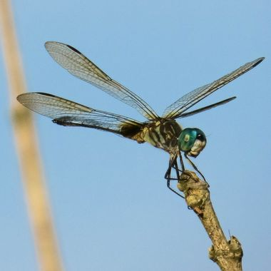 07-15 DRAGONFLY-2-3