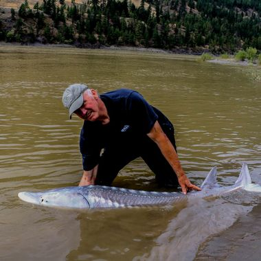 Sturgeon Fishing the Fraser River. Me with a 7 foot sturgeon.
