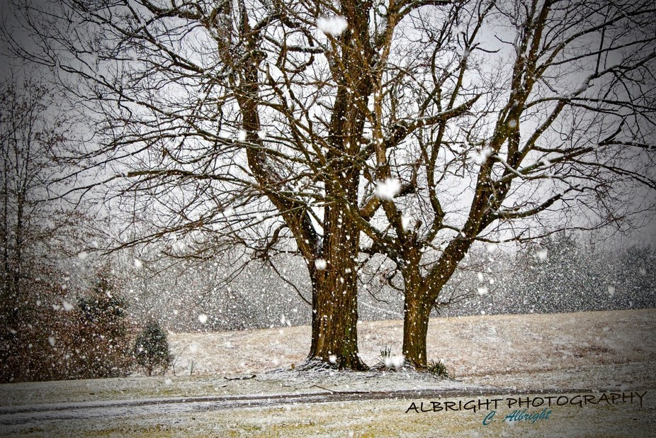 Large beautiful flakes of snow falling on a Saturday afternoon in late February.  Like stepping into a snow globe!