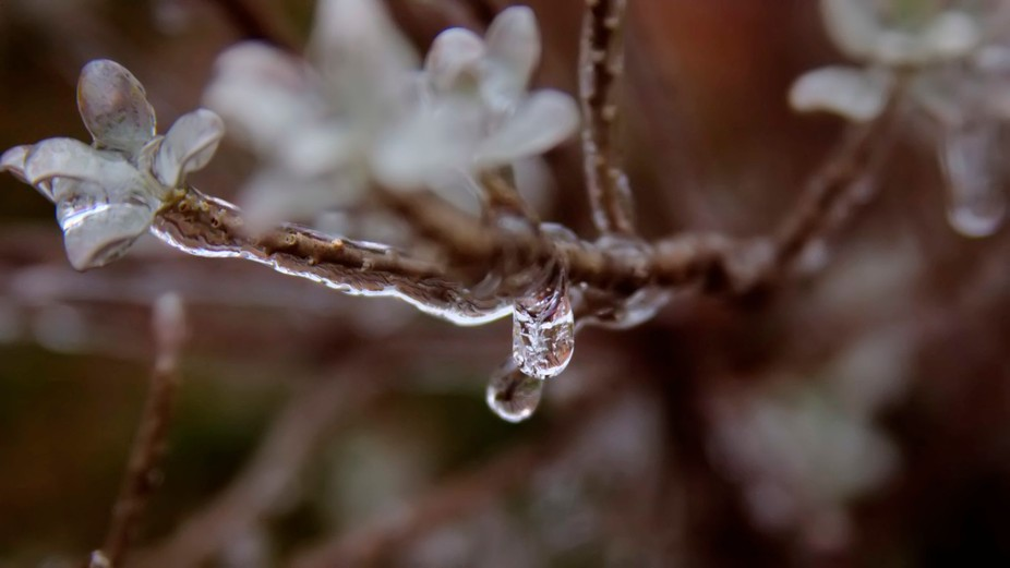 Ice Drop_7890_1_2_ton b2