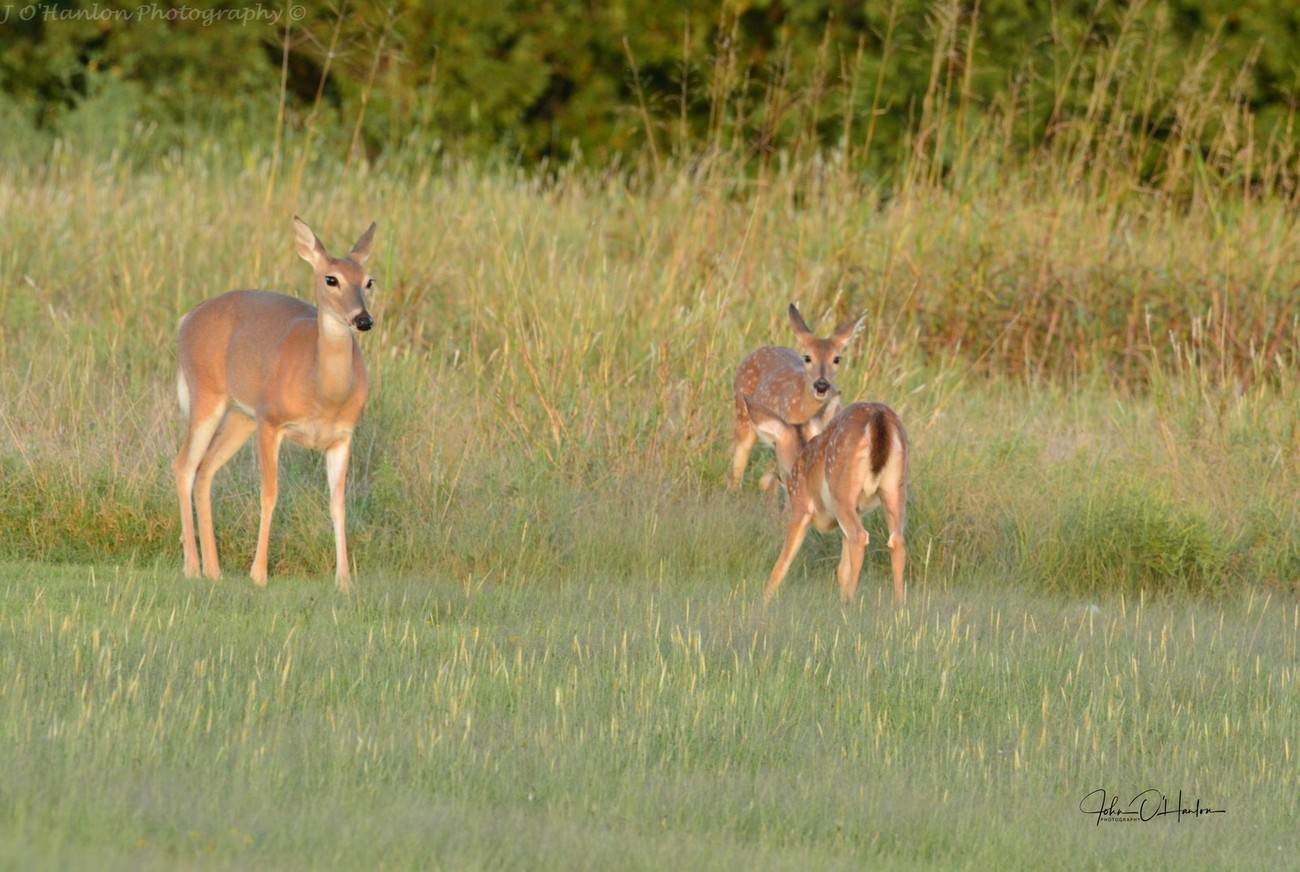 Young Fawns out playing at the park