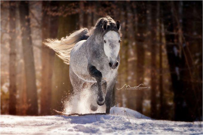 A Single Horse Photo Contest Winner