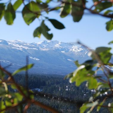 0   A Mt Arrowsmith through the Arbutus branches Little Mtn 22 Feb 2018 DSC_4597