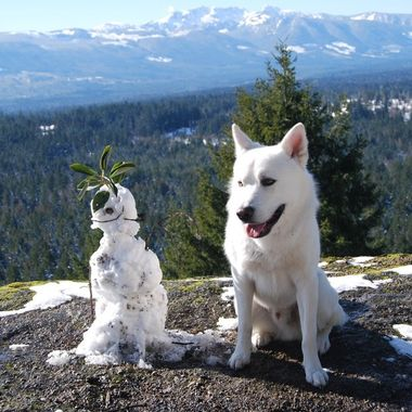Acceptance of the little Snowman on Little Mountain ... but first we bark at the little Snowman lol - 22 feb 2018