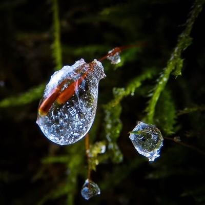 @photoarcade_contest Frozen drops on Lanky Moss #arcadeofdrops #trailsend #lankymoss #frozendrops #icedrops #icestorm #wander #woods #outthebackdoor #backyardnature #beautyinnature #canon_photos #canonglobal #canonwhatelse #got_greatshots #marvelouz_world