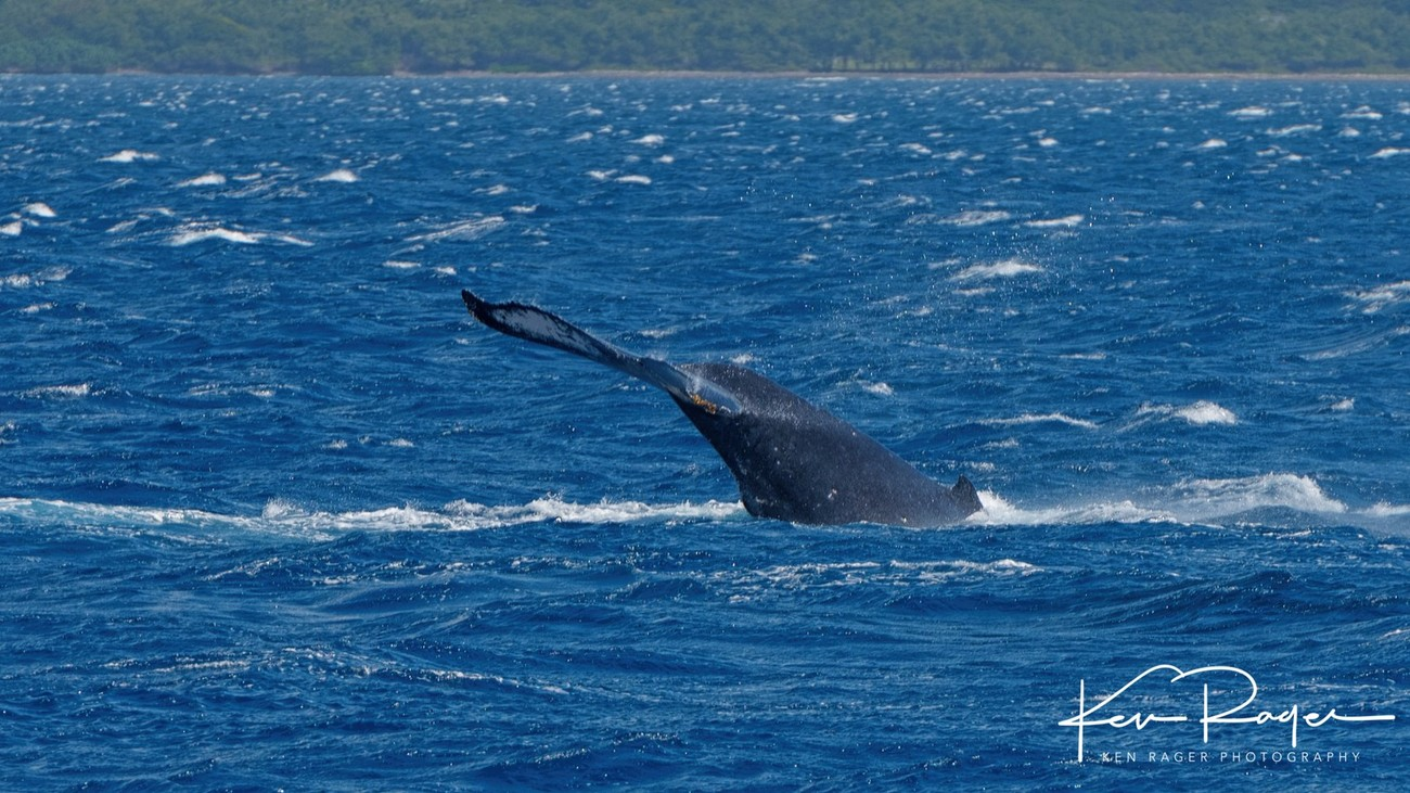 WhaleTails-4