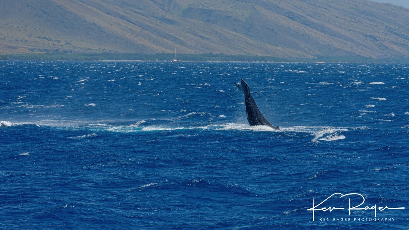 WhaleTails-7