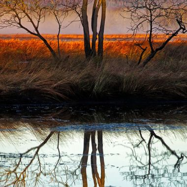 A tree in a marsh at sunrise.