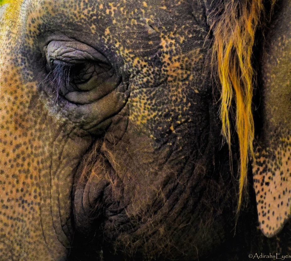 Elephants tend to have that 'old' look. I hope it is only on the outside. wink.