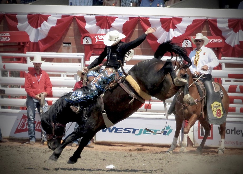 Champion Zeke Thurston at the Calgary Stampede Saddle Bronc Finals, stretching for every point of...
