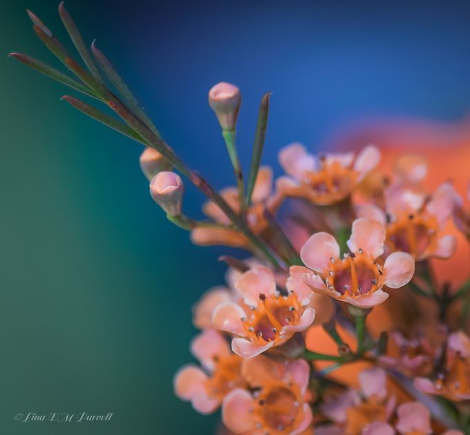 The season of color by linmadi - Pastel Colors Photo Contest