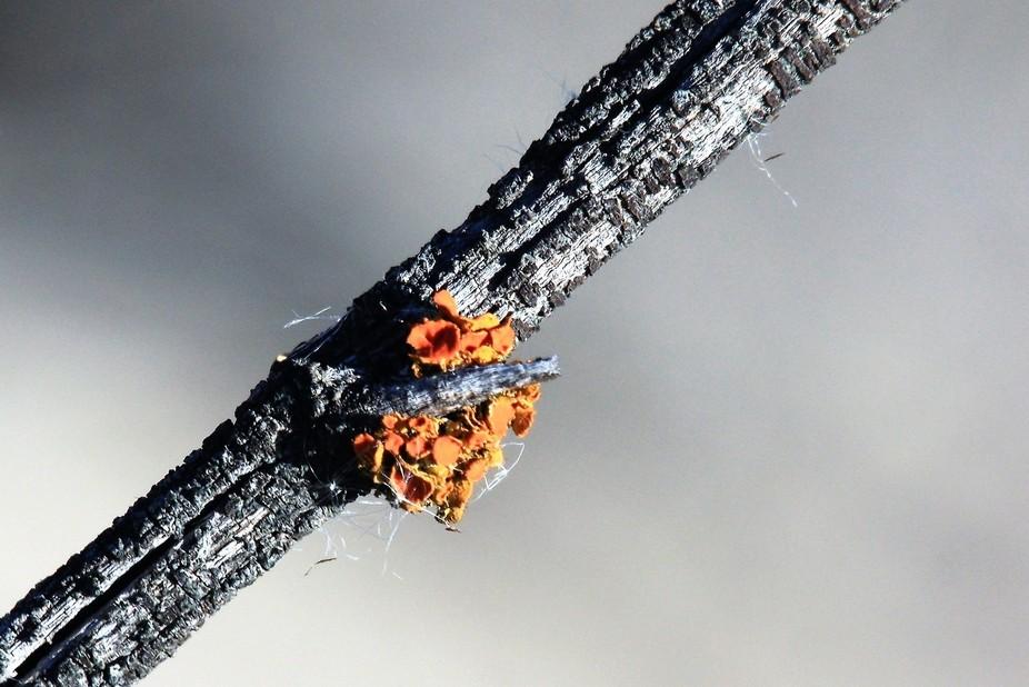 a little twiggy