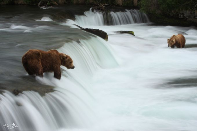 Waiting for the salmon run by KatiMaiSeiffer - Bears Photo Contest