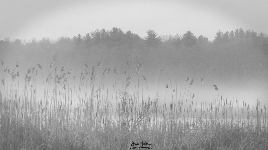 A moody day in the marsh