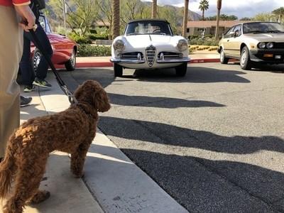 Alfa Dog with Alfa Romeo