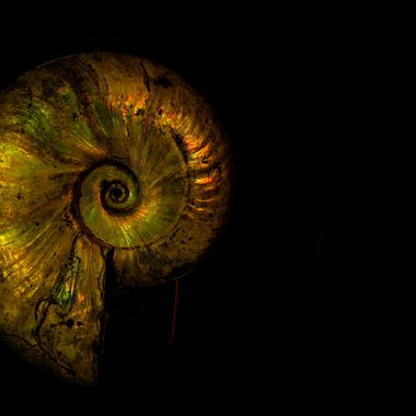 This is an ammonite from Madagascar. Long ago these creatures became extinct. I believe this one is about 100 million years old.