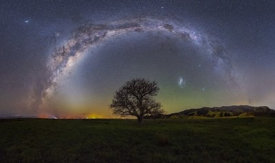The  Lone Tree under the Stars