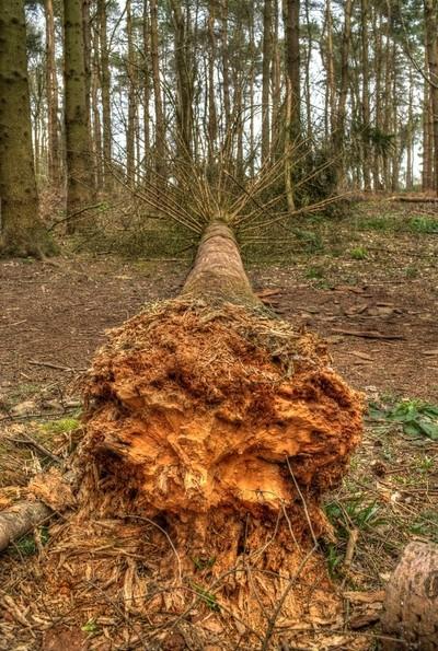 oakley fallen
