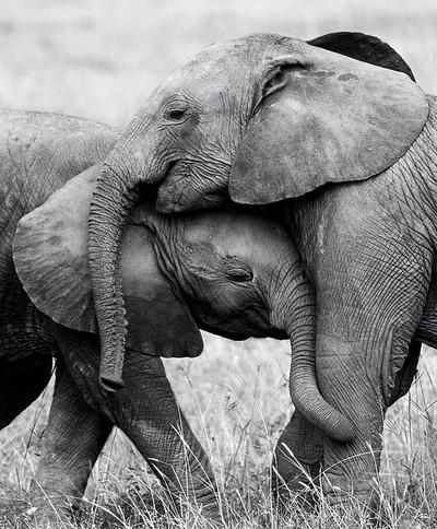 Hug time !
