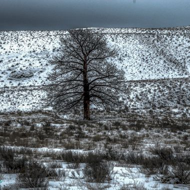 One lone tree along the Highway to Kamloops. This tree has been killed by the pine Beetle epidemic.