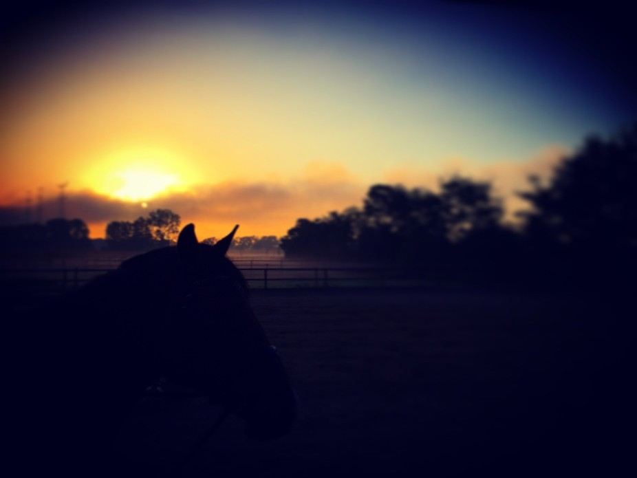 Sunset on a horse