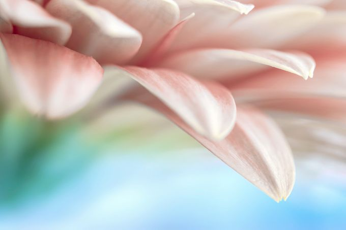 Tender closeup by IamAleks - Pastel Colors Photo Contest
