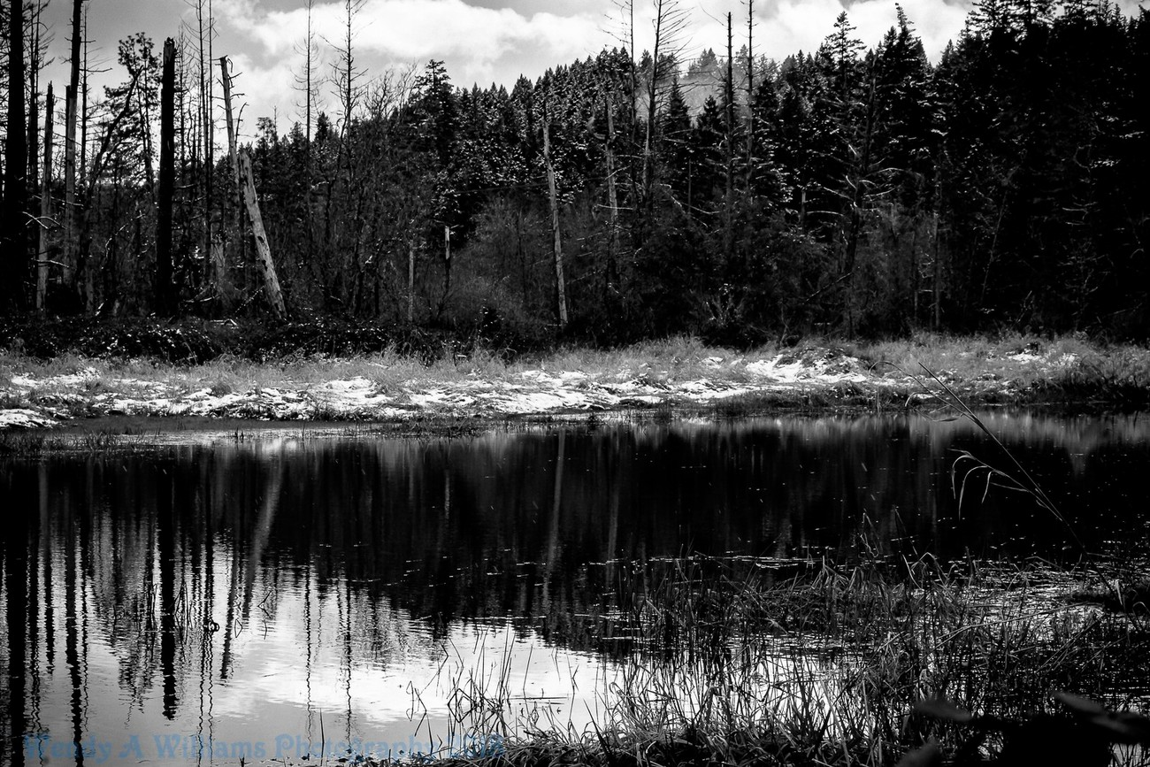 I found this beautiful frog pond the other day and snapped away different types of images of it and also tried B&W