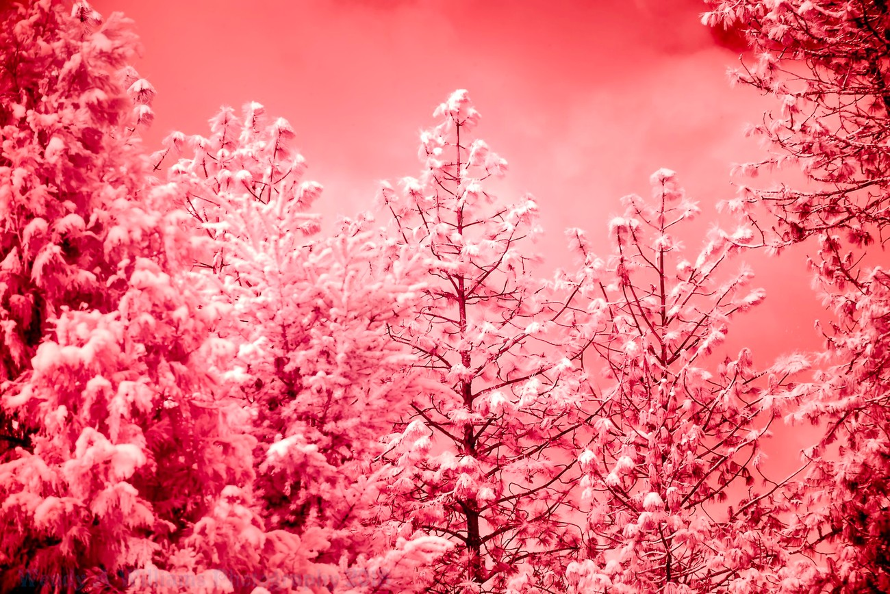 our area got some snow the other day so I took out my Nikon Infra-Red D610 camera out and played around.