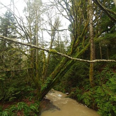Creek near Qualicum Bay -  January 9, 2018