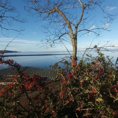End of the Park - the Salish Sea - Dec 15, 2017