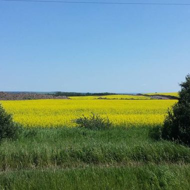 Canola fields of Ft. Saint John, B.C. just beautiful July 21, 2017