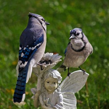 Two blue jays perched on a garden ornament.