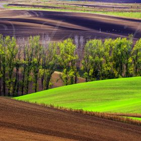 Wavy  autumn fields and trees in South Moravia