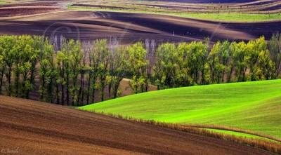 Wavy  autumn fields in South Moravia